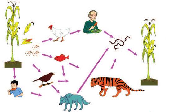 hubungan antar makhluk hidup