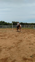 PSSM horse rehab