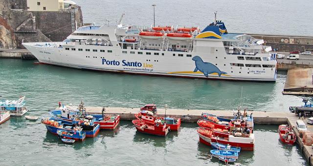 Resultado de imagem para lobo marinho porto do Funchal