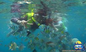 menyaksikan keindahan biota laut pulau tidung