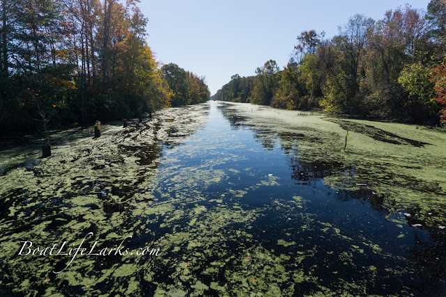 Dismal Swamp Shoal area at Feeder Ditch