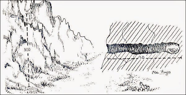 nidos de bandurritas