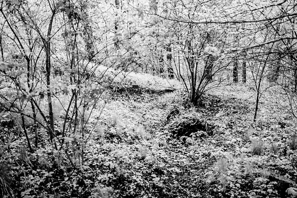 Zamek_w_Czudcu_k._Rzeszowa_ruiny_sredniowiecznego_zamku