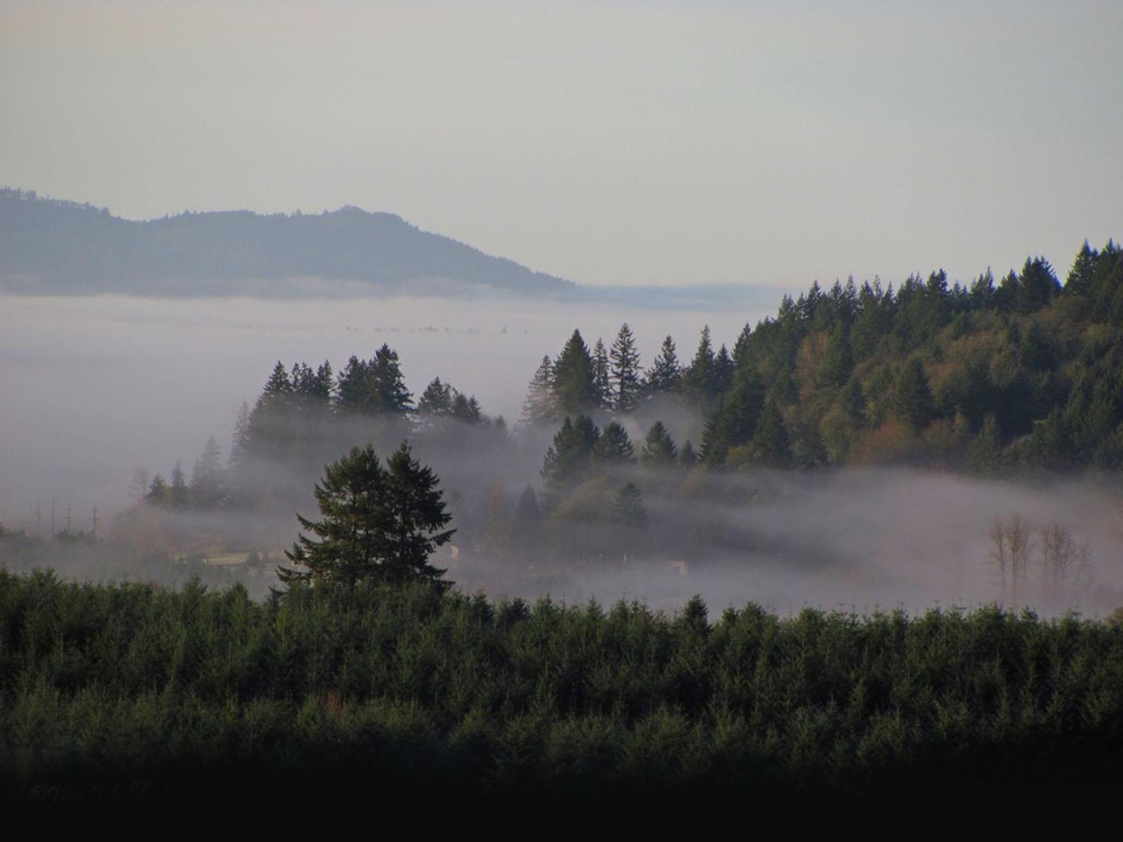 wallpaper: Fog After The Rain