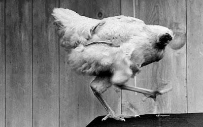 9 animales que pueden sobrevivir sin su cabeza.