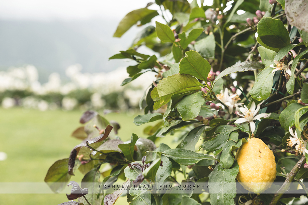 Lemon tree Belmond Caruso Ravello