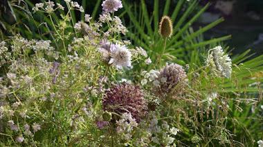 Cosecha de flores silvestres en el jardín