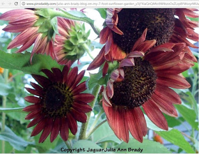 JaguarJulie Ann Brady COPYRIGHTED Autumn Beauty Sunflower