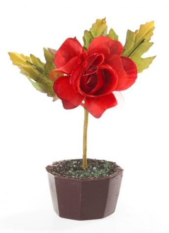 Pot de rose