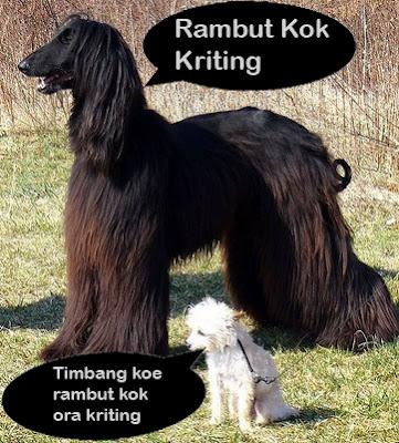 gambar lucu hewan anjing
