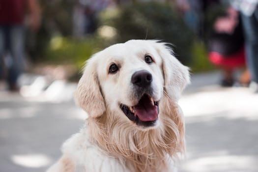 Treats Affect Dog's Diet