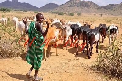 Six Herdsmen, 150 Cows Killed In Nasarawa