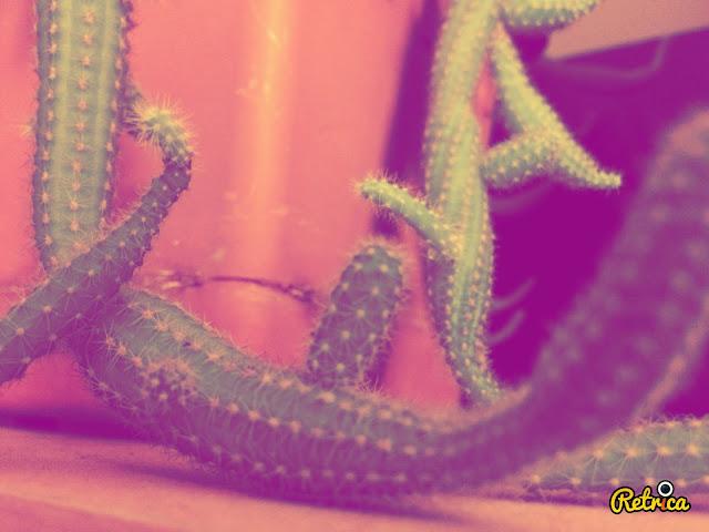 Kaktüs Fotoğrafı