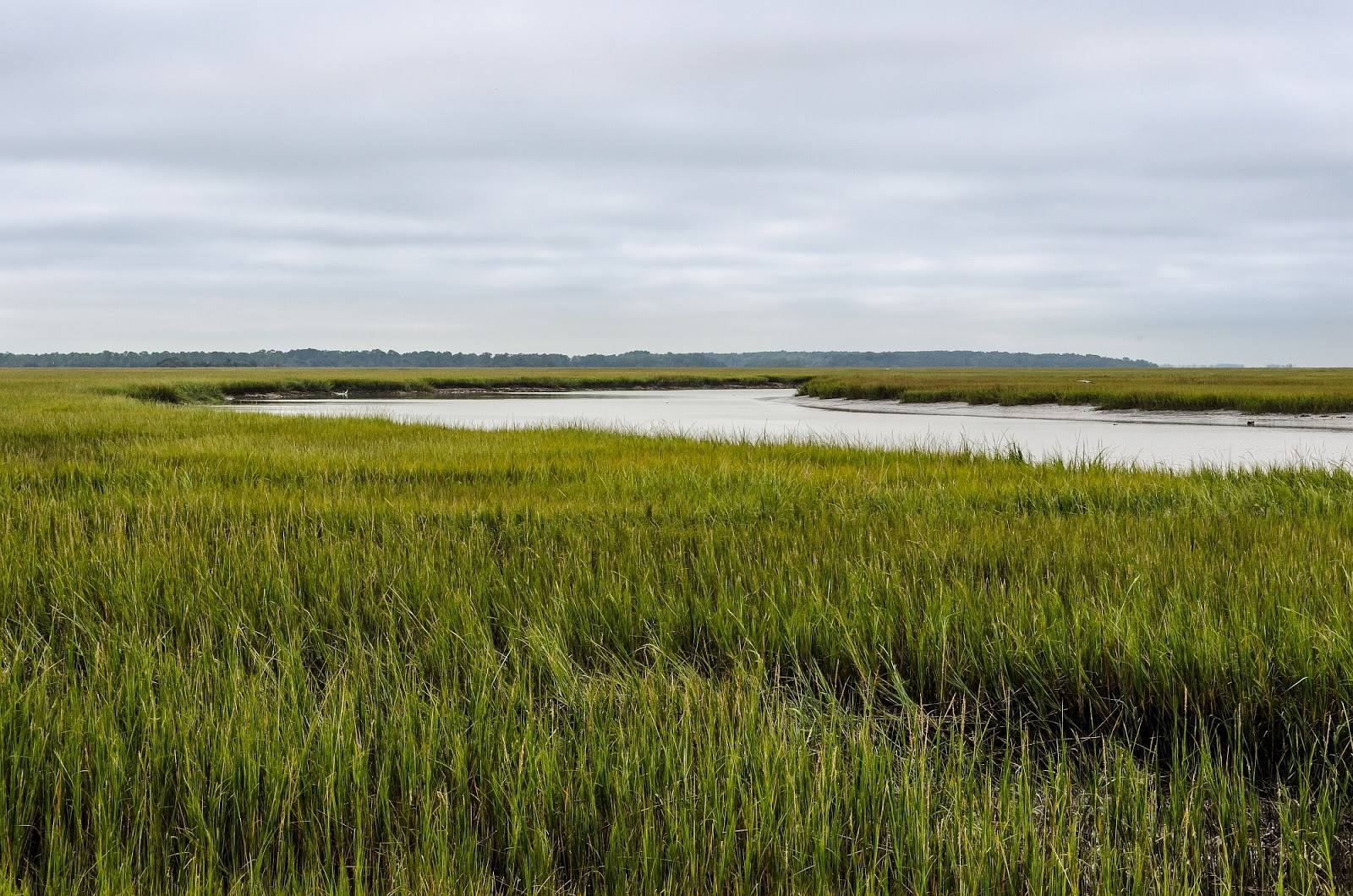 Hunting Island Salt Marsh