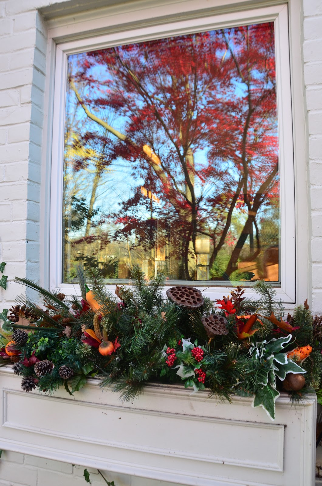 Zone Five and a Half: Planting Windowboxes -- No pane, no ... - photo#38