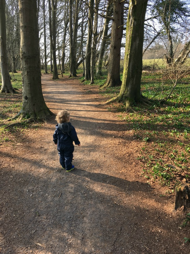 The Fforest Fawr Sculpture Trail good paths with a toddler standing looking at the trees