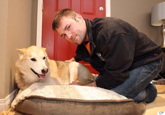 Hombre da puñetazo en la cara a un puma para salvar su perro