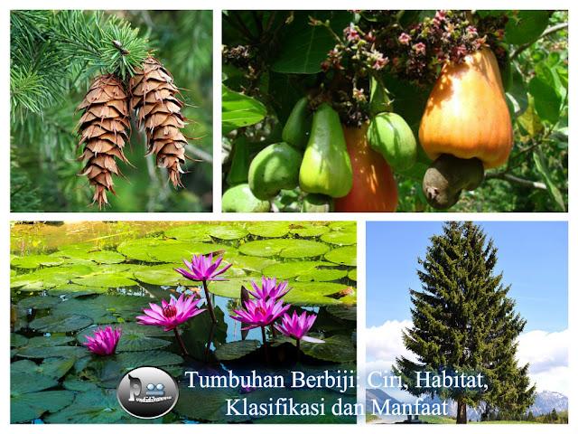 Tumbuhan Berbiji: Ciri, Habitat, Klasifikasi dan Manfaat