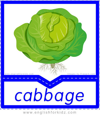 Cabbage - English flashcards for the fruits and vegetables topic