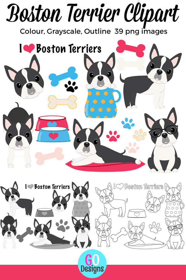 Super cute Boston Terrier clipart. 39 images in all: colour, grayscale and outlines. You'll love these adorable graphics!