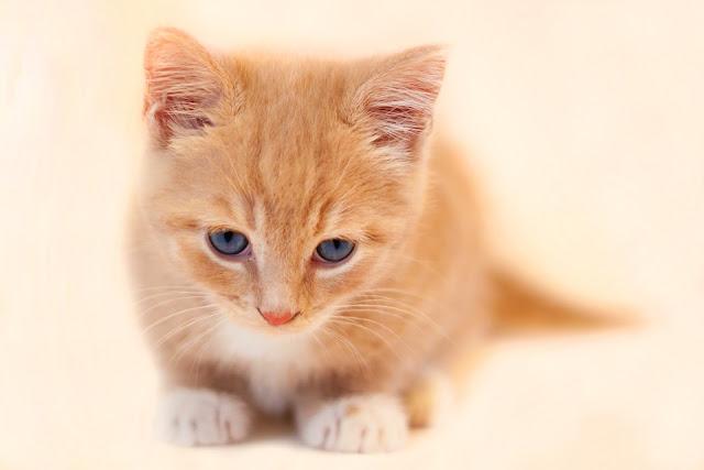 Mengapa Kucing Lebih Bersih dari Manusia, Ini Penjelasannya...