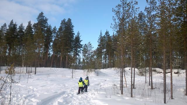 talvinen metsä lumikenkäretki