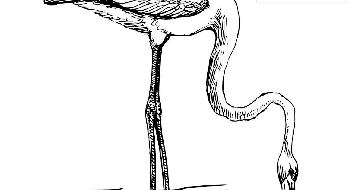 Gambar Menebalkan Huruf Mewarnai Ember Media Belajar Anak Flamingo Usia