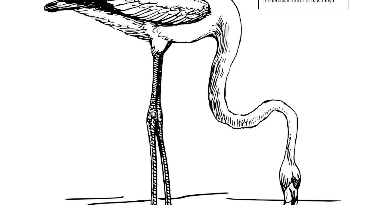 Menebalkan Huruf F Dan Mewarnai Gambar Flamingo