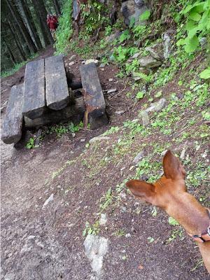 ツール・ド・モンブラン ル・プティからバルム峠 ピクニックテーブル