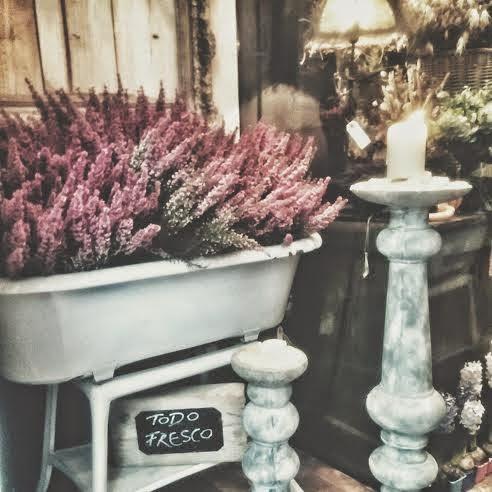 flores acanto
