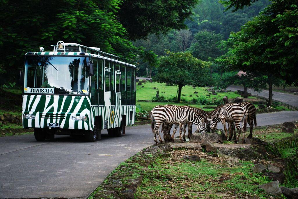 Wisata Alam Taman Safari 2 Prigen