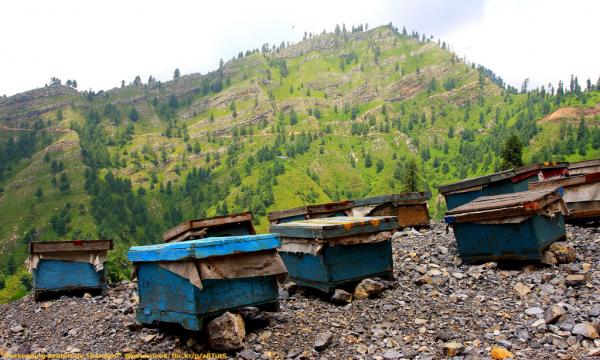 Τι ορίζει ο νόμος για την τοποθέτηση μελισσιών σε δημόσιες δασικές εκτάσεις