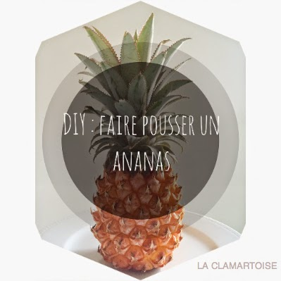 la clamartoise diy comment faire pousser un ananas. Black Bedroom Furniture Sets. Home Design Ideas