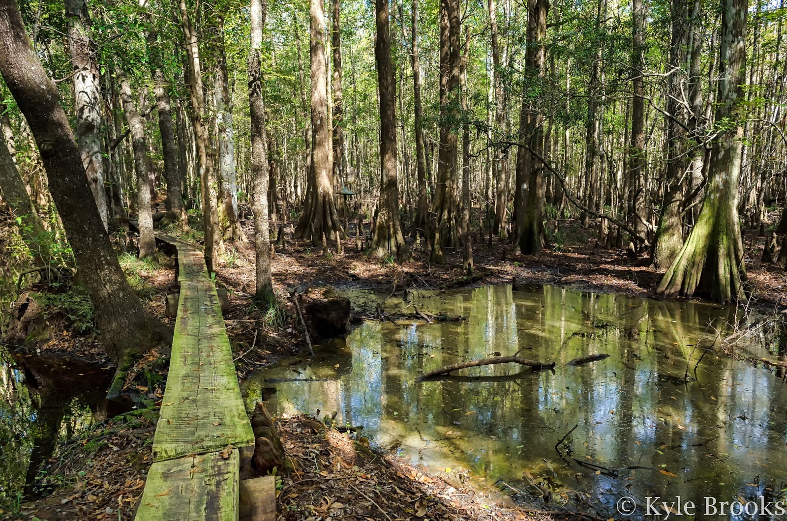 I'On Swamp Interpretive Trail South Carolina