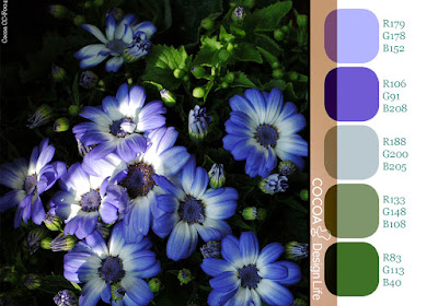 Color chart of blue daisy