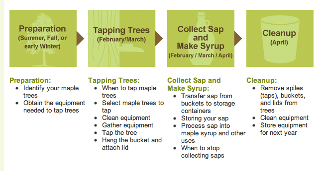 Did you know it's really simple to tap a MAPLE TREE and get some liquid gold