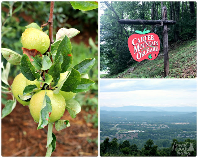 At the top of a winding mountain road in Charlottesville, Virginia is Carter Mountain Orchard. The orchard grows over a dozen varieties of apples with most available for pick your own. But what might be most impressive about Carter Mountain are the views from their back deck.