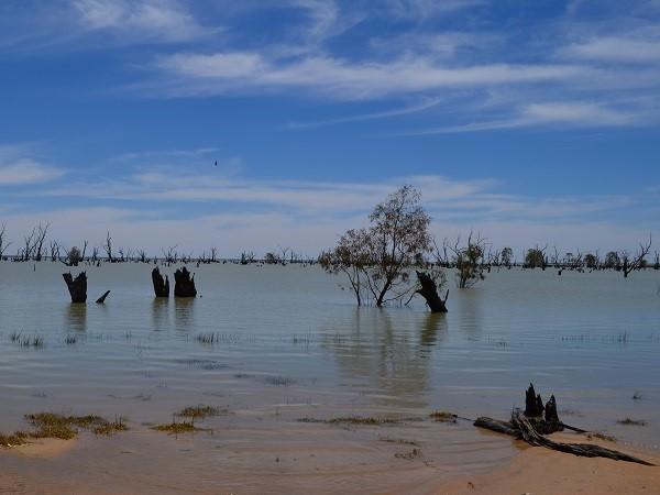 Palude Lago Vittoria