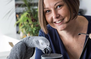 Pet parrot uses voice-controlled gadget to place order with Amazon