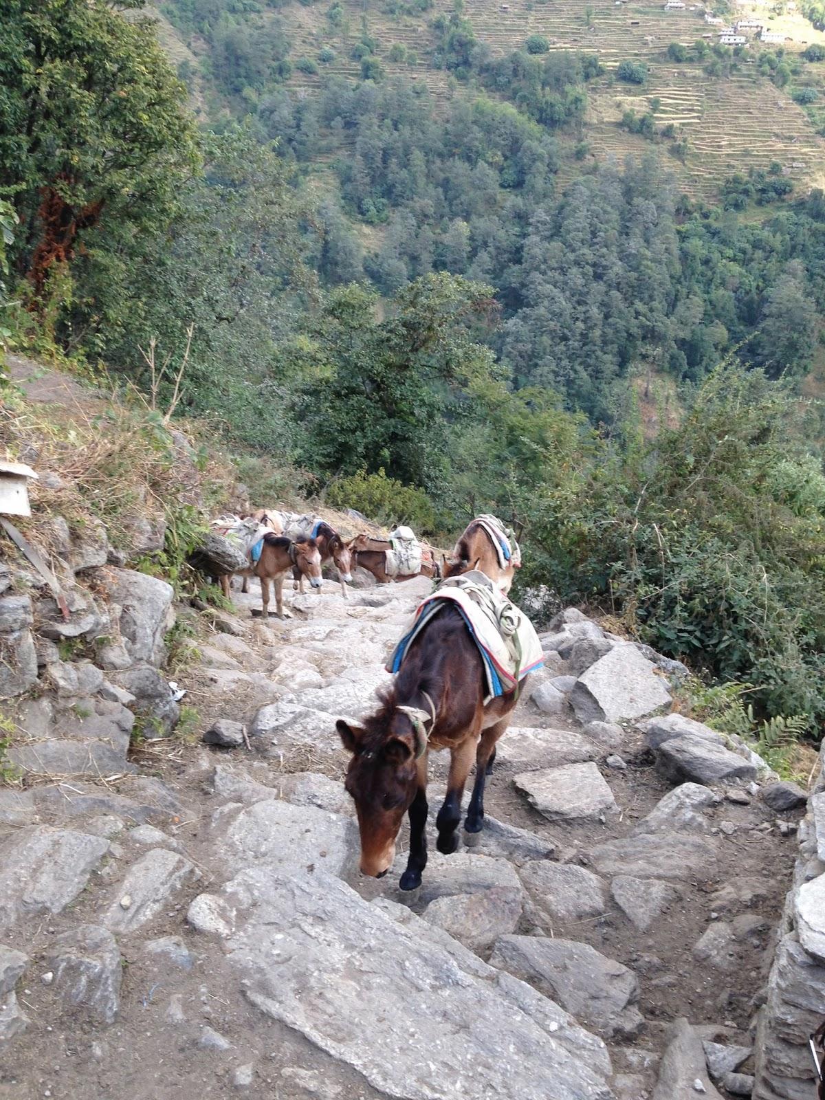 donkeys nepal