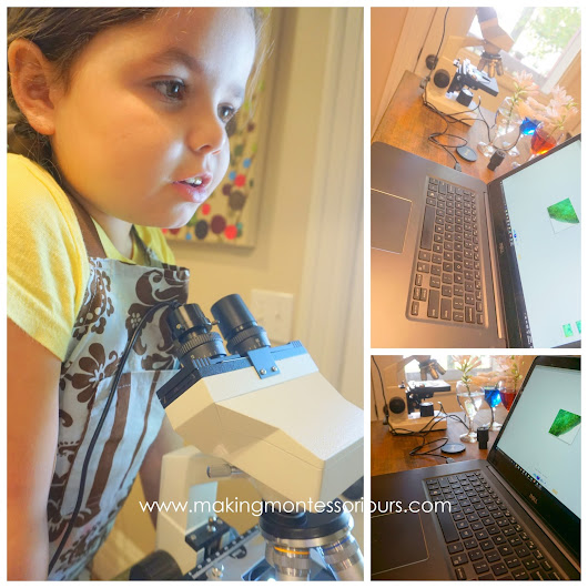 Stem Cross Sections & Plant Study, Montessori Botany at Home