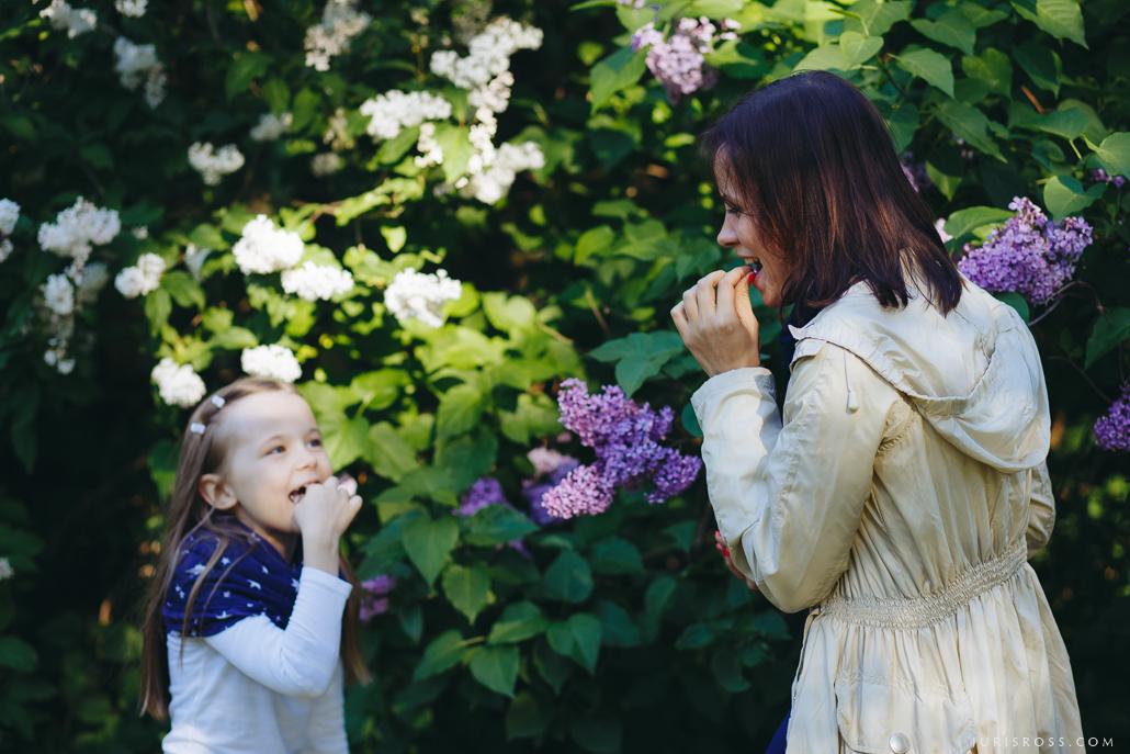 Laimītes apēšana ceriņu ziedu
