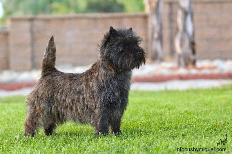 DOG SHOW POOP: SANGTA ANA VALLEY KENNEL CLUB