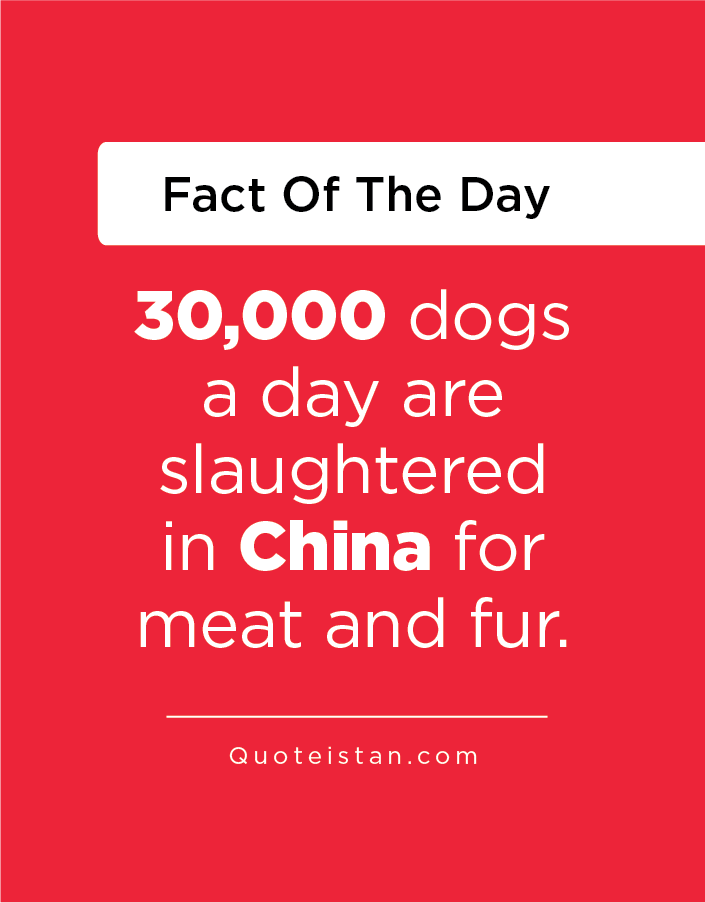 30,000 dogs a day are slaughtered in China for meat and fur.