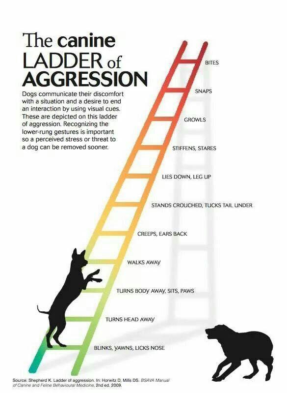 """Merrit Clifton Debunked: """"Dangerous breeds,"""" dog bite"""
