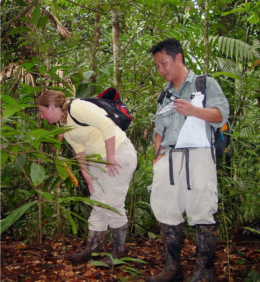 Kenro Kusumi collecting specimen of anole lizards in Panama with Jeanne Wilson-Rawls