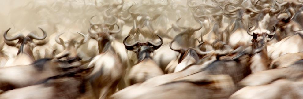 الفوضى الرائعة ، تم التقاط هذه الصورة في محمية ماساي مارا في كينيا