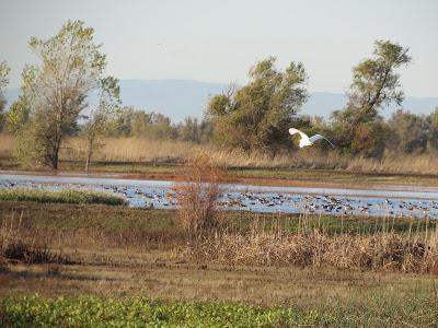 Llano Seco WMA