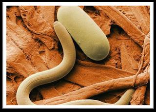 prevenire-nematodi-radici-piante-indoor