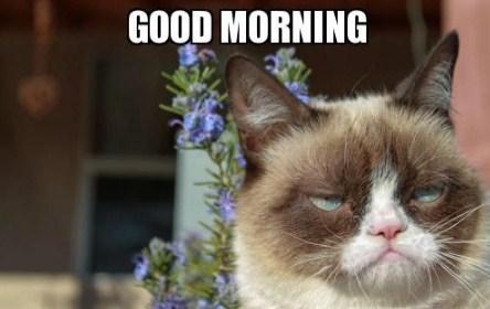 Funny Memes For Good Morning : Funny good morning meme images gif meme